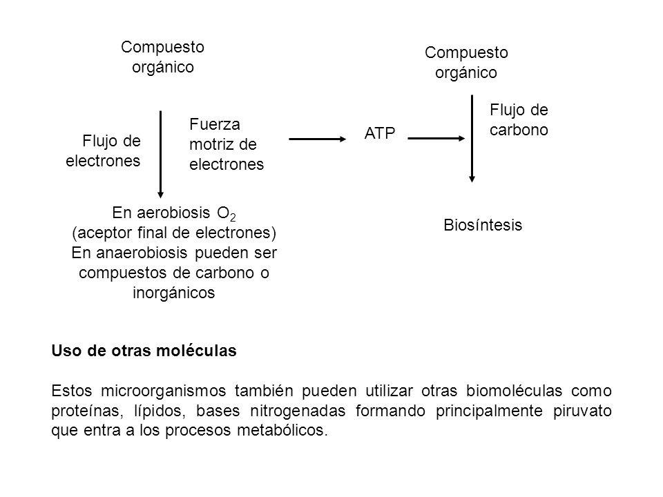 Compuesto orgánico ATP Biosíntesis Compuesto orgánico En aerobiosis O 2 (aceptor final de electrones) En anaerobiosis pueden ser compuestos de carbono