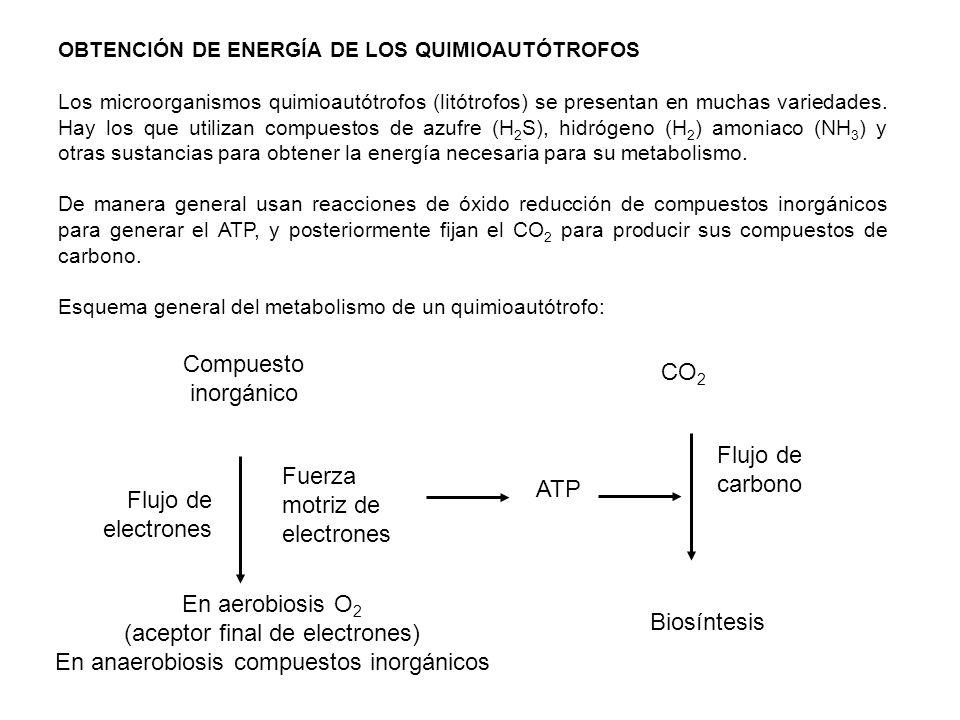 OBTENCIÓN DE ENERGÍA DE LOS QUIMIOAUTÓTROFOS Los microorganismos quimioautótrofos (litótrofos) se presentan en muchas variedades. Hay los que utilizan