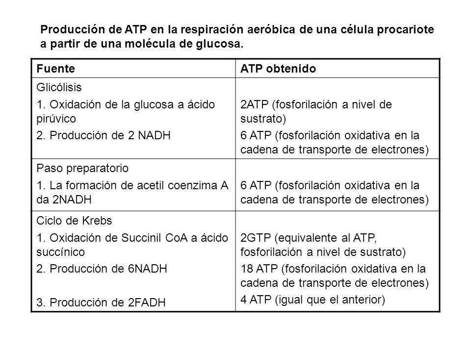 Producción de ATP en la respiración aeróbica de una célula procariote a partir de una molécula de glucosa. FuenteATP obtenido Glicólisis 1. Oxidación