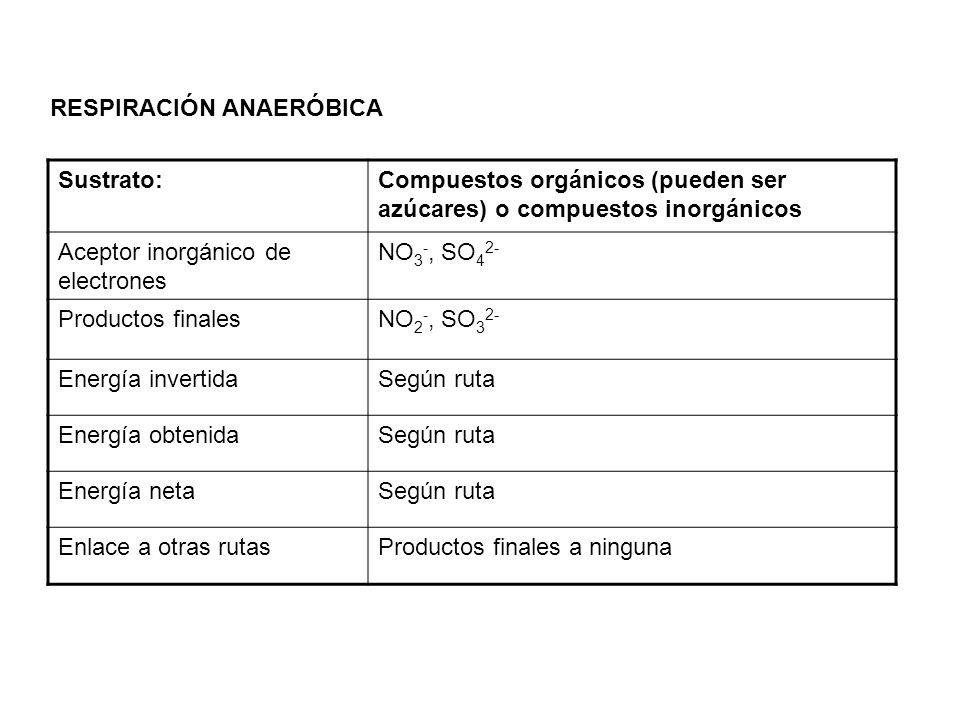 RESPIRACIÓN ANAERÓBICA Sustrato:Compuestos orgánicos (pueden ser azúcares) o compuestos inorgánicos Aceptor inorgánico de electrones NO 3 -, SO 4 2- P