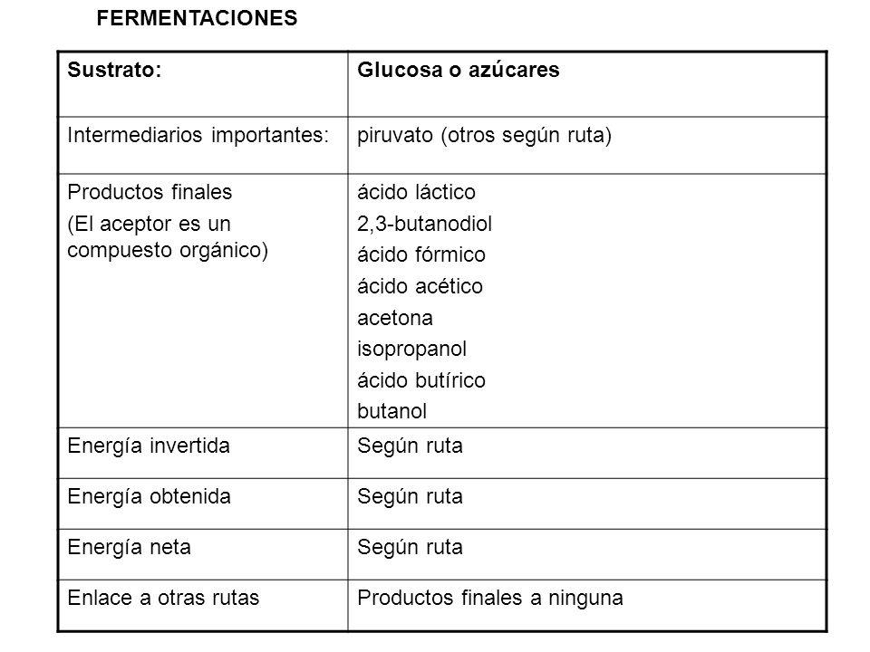 Sustrato:Glucosa o azúcares Intermediarios importantes:piruvato (otros según ruta) Productos finales (El aceptor es un compuesto orgánico) ácido lácti