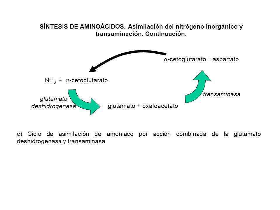 NH 3 + -cetoglutarato glutamato + oxaloacetato -cetoglutarato + aspartato glutamato deshidrogenasa transaminasa c) Ciclo de asimilación de amoniaco po