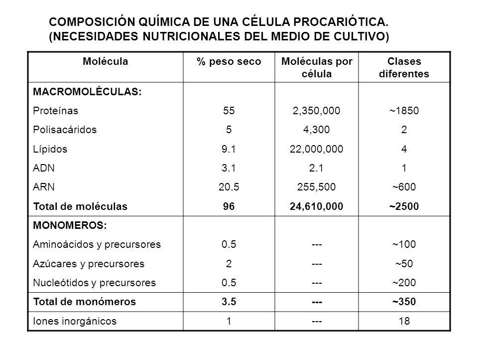 COMPOSICIÓN QUÍMICA DE UNA CÉLULA PROCARIÓTICA. (NECESIDADES NUTRICIONALES DEL MEDIO DE CULTIVO) Molécula% peso secoMoléculas por célula Clases difere