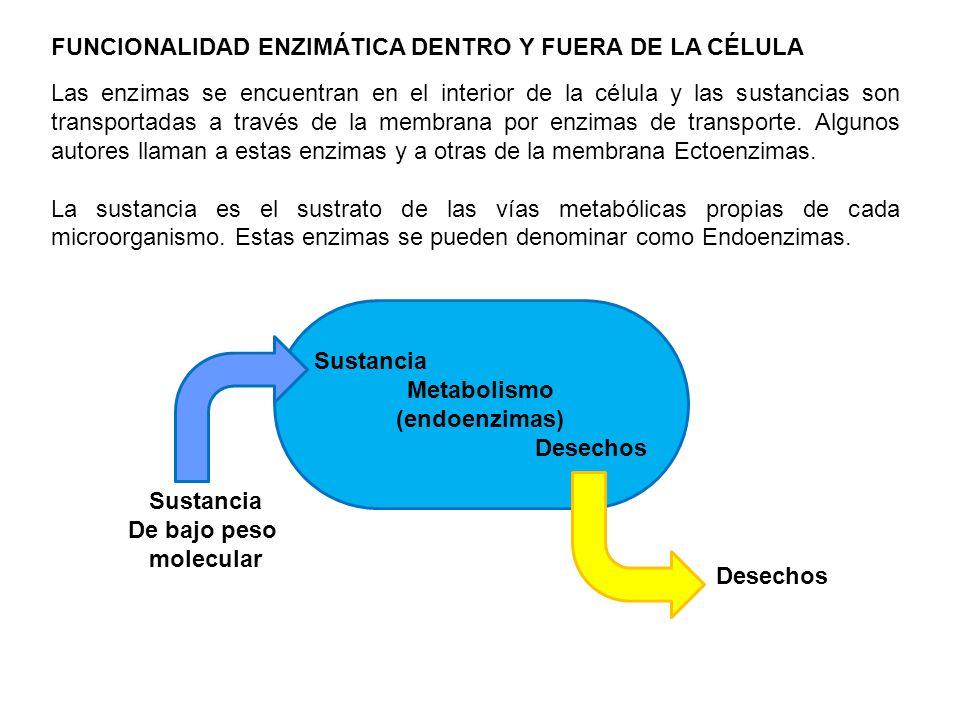 Las enzimas se encuentran en el interior de la célula y las sustancias son transportadas a través de la membrana por enzimas de transporte. Algunos au