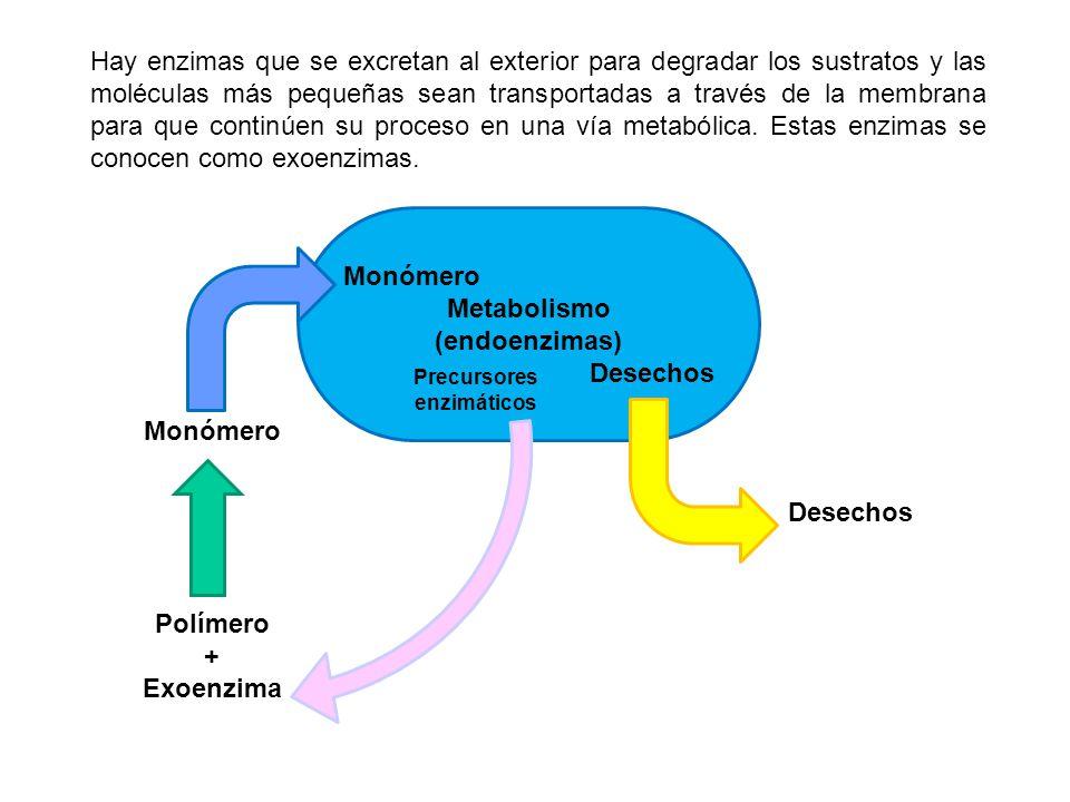 Hay enzimas que se excretan al exterior para degradar los sustratos y las moléculas más pequeñas sean transportadas a través de la membrana para que c