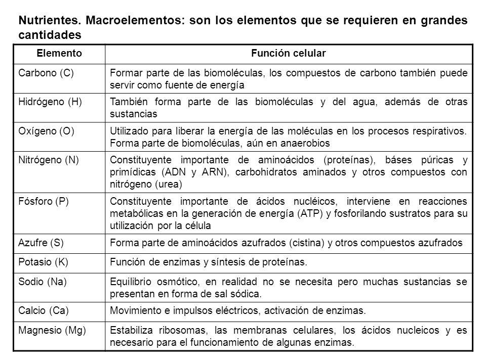 Nutrientes. Macroelementos: son los elementos que se requieren en grandes cantidades ElementoFunción celular Carbono (C)Formar parte de las biomolécul