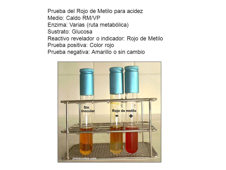 Prueba del Rojo de Metilo para acidez Medio: Caldo RM/VP Enzima: Varias (ruta metabólica) Sustrato: Glucosa Reactivo revelador o indicador: Rojo de Me