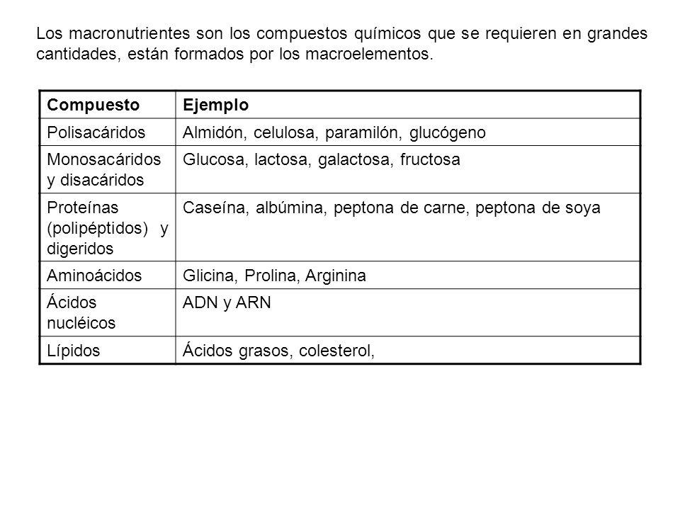 SUSTANCIAS COMÚNMENTE EMPLEADAS EN MEDIOS DE CULTIVO ElementoForma habitual en que se encuentra Forma utilizada en medios de cultivo Carbono (C)CO 2, compuestos orgánicos Glucosa, malato, acetato, piruvato, peptonas, lípidos Hidrógeno (H)H 2 O, compuestos orgánicos Oxígeno (O)H 2 O, O 2, compuestos orgánicos Nitrógeno (N)NH 3, NO 3 -, NO 2 -, compuestos orgánicos nitrogenados Inorgánicos: NH 4 Cl, (NH 4 ) 2 SO 4, KNO 3, N 2 Orgánicos: aminoácidos bases nitrogenadas, otros compuestos orgánicos con N Fósforo (P)PO 4 3- KH 2 PO 4, Na 2 HPO 4 Azufre (S)H 2 S, S 2-, SO 4 2- compuestos orgánicos azufrados Na 2 SO 4, Na 2 S 2 O 3, Na 2 S, compuestos orgánicos azufrados Potasio (K)K+K+ KCl, KH 2 PO 4 Magnesio (Mg)Mg 2+ MgCl 2, MgSO 4 Sodio (Na)Na + NaCl Calcio (Ca)Ca 2+ CaCl 2 Hierro (Fe) Fe 2+ o Fe 3+, o FeSFeCl 3, FeSO 4, soluciones de Fe con EDTA