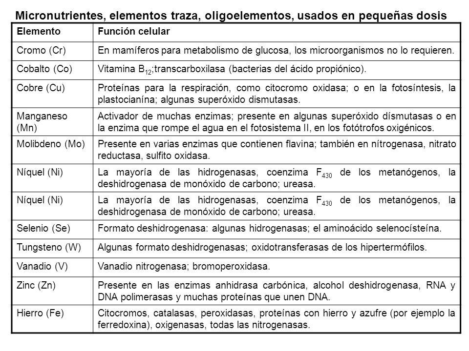TIPOS NUTRICIONALES DE LOS MICROORGANISMOS Dominio MicroorganismoTipo Nutricional Archaea Thermoproteus sp, Thermococcus spQuimioheterótrofa (aceptor S 0 ) Archaeglobus sp, Sulfolobus sp, Acidianus spQuímioautótrofa (litótrofa) Halobacterium spFotoautótrofo (bacteriorrodopsina) Bacteria Bacterias Rojas no del azufre Rhodobacter sp, Rhodoila spFotoautótrofo anoxigénico Bacterias rojas del azufre Cromatium sp, Thiospirillum spFotoheterótrofos Bacterias verdes no del azufreFotoautótrofos anoxigénico Bacterias verdes del azufre Cholorbium sp, Heliobacillus spFotoautótrofo anoxigénico Cianobacterias Gloeothece sp, Anabaena sp, Fischerella spFotoautótrofo oxigénico Acidiothiobacillus sp (Thiobacillus sp)Quimioautótrofo (Litotrofo) Escherichia coli, Salmonella sp, Proteus sp, Staphylococcus sp, Bacillus sp Quimiheterótrofo Eukarya HongosQuimioheterótrofos ProtozoariosQuimioheterótrofos Protozoario / Algas (Euglena)Químioheterótrofos / Fotoautótrofos (oxigénicos) AlgasFotoautótrofos (oxigénicos)