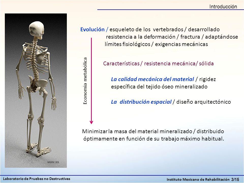 Conclusiones 14/15 Laboratorio de Pruebas no Destructivas Instituto Mexicano de Rehabilitación Hemos realizado un estudio retrospectivo, a pequeña escala, de los parámetros que determinan la calidad ósea de varones mexicanos de entre 30 y 70 años, abarcando tanto la calidad del material como su distribución espacial.