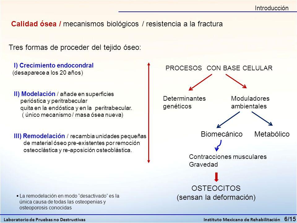 Cientos de osteoblastos de rata, incluyendo algunos sufriendo mitosis / 200 veces ww.brsoc.org.uk (OSTEOCITOS) deformaciones Estimula o inhiben / orientan espacialmente Liberación de mediadores celulares osteocíticos hacia los osteoblastos inactivos Se activa o inactiva la remodelación -UNICO PROCESO REGULADOR – DE LA CALIDAD ÓSEA El entorno metabólico modula no regula / los efectos todas las hormonas conocidas sobre el tejido óseo están dirigidas a controlar o modificar el equilibrio mineral del medio interno -no regulan ninguna variable o propiedad esquelética- 7/15 Introducción Laboratorio de Pruebas no Destructivas Instituto Mexicano de Rehabilitación