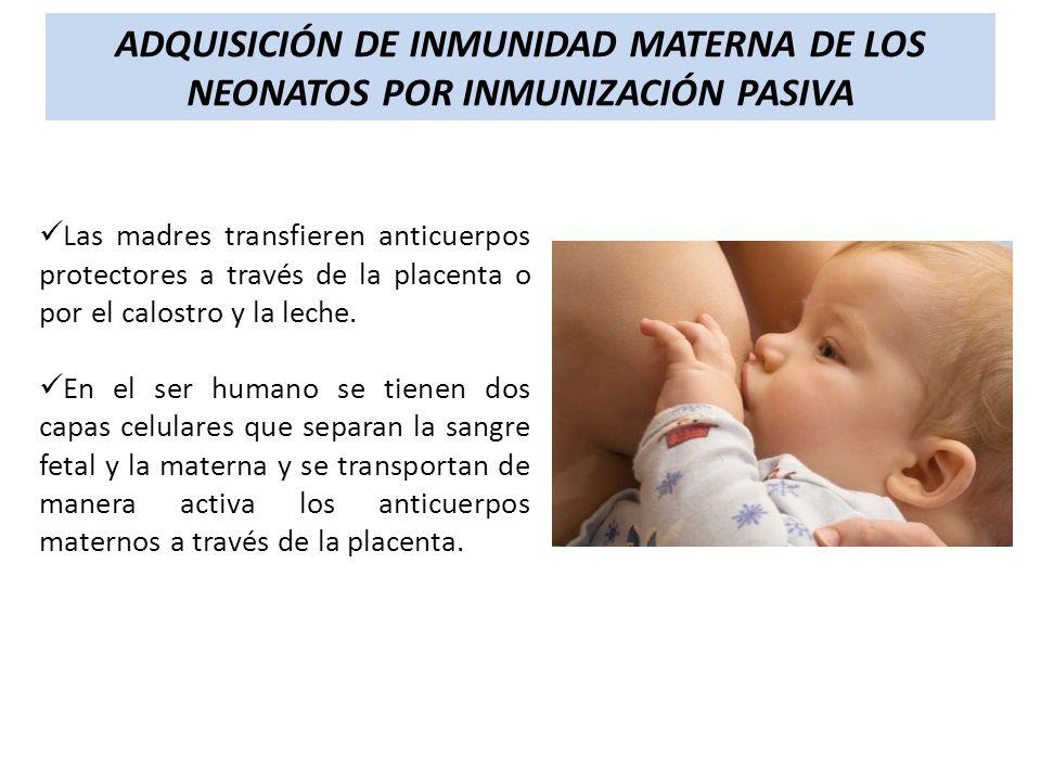Las madres transfieren anticuerpos protectores a través de la placenta o por el calostro y la leche. En el ser humano se tienen dos capas celulares qu