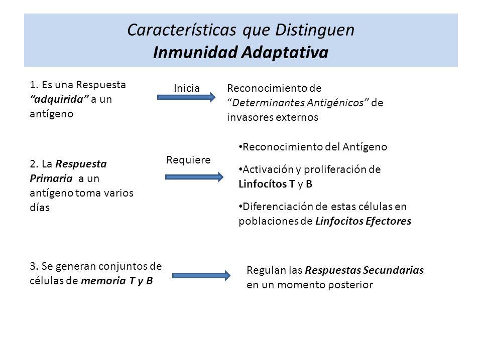 Características que Distinguen Inmunidad Adaptativa 1. Es una Respuesta adquirida a un antígeno Reconocimiento deDeterminantes Antigénicos de invasore