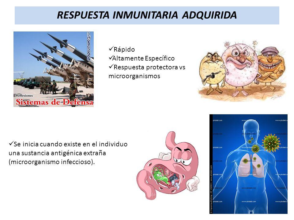 Rápido Altamente Específico Respuesta protectora vs microorganismos Se inicia cuando existe en el individuo una sustancia antigénica extraña (microorg