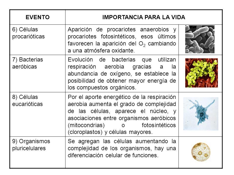EVENTOIMPORTANCIA PARA LA VIDA 6) Células procarióticas Aparición de procariotes anaerobios y procariotes fotosintéticos, esos últimos favorecen la ap