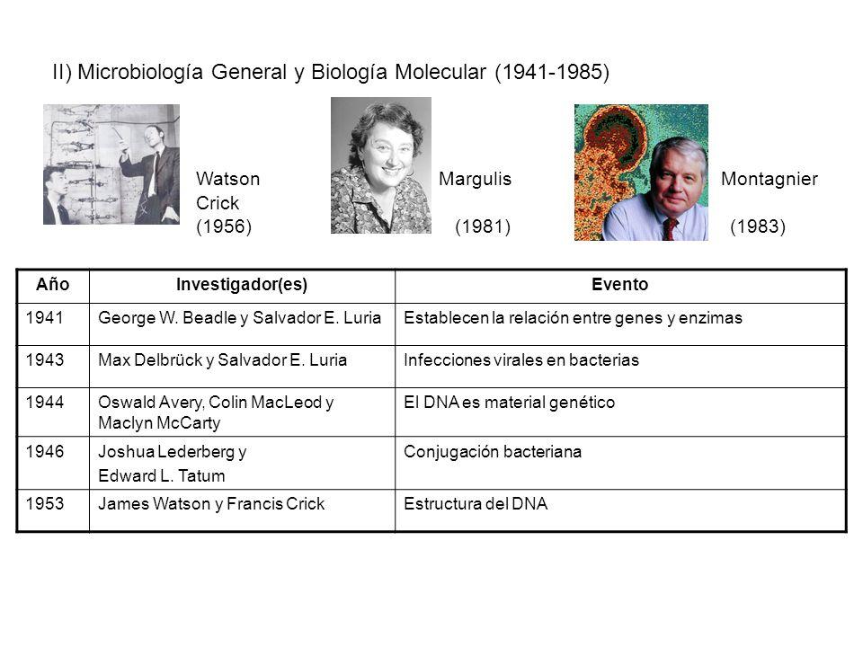 II) Microbiología General y Biología Molecular (1941-1985) Watson Margulis Montagnier Crick (1956)(1981) (1983) AñoInvestigador(es)Evento 1941George W