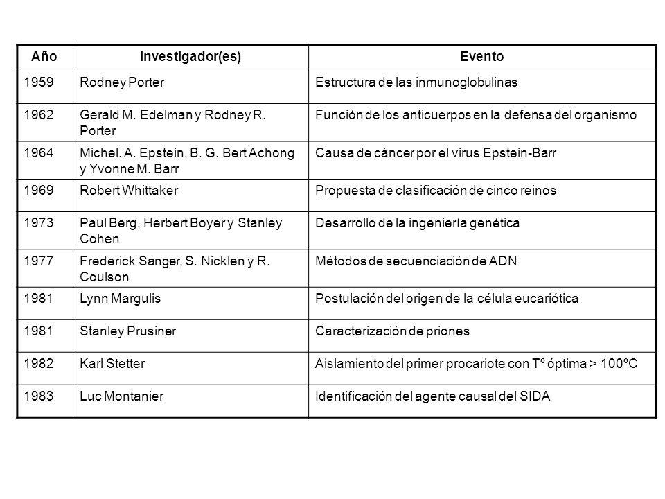 AñoInvestigador(es)Evento 1959Rodney PorterEstructura de las inmunoglobulinas 1962Gerald M. Edelman y Rodney R. Porter Función de los anticuerpos en l