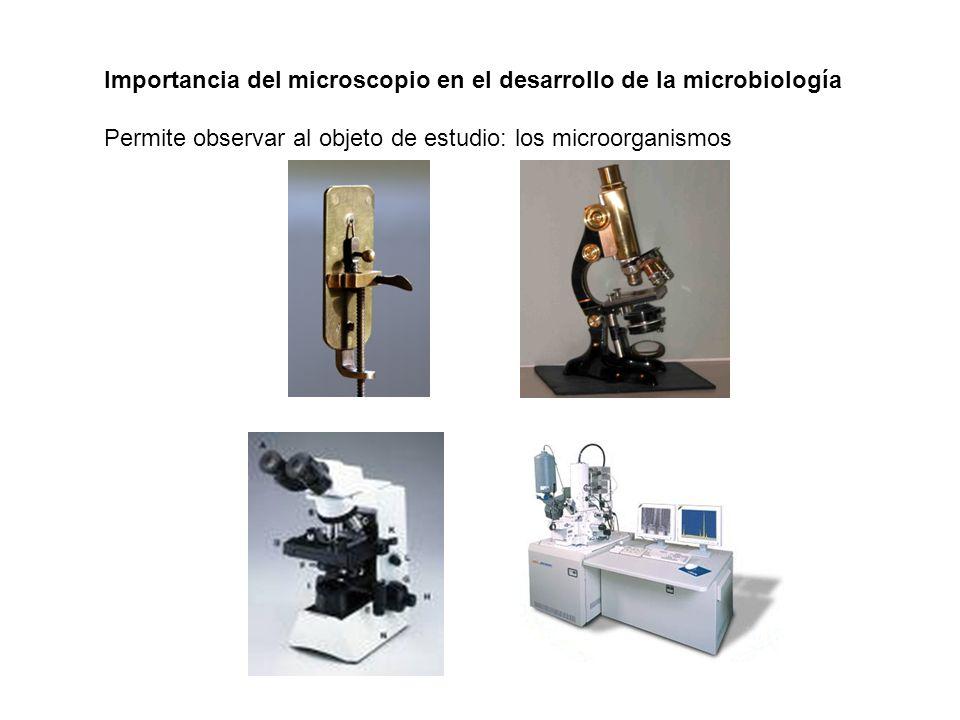 Importancia del microscopio en el desarrollo de la microbiología Permite observar al objeto de estudio: los microorganismos