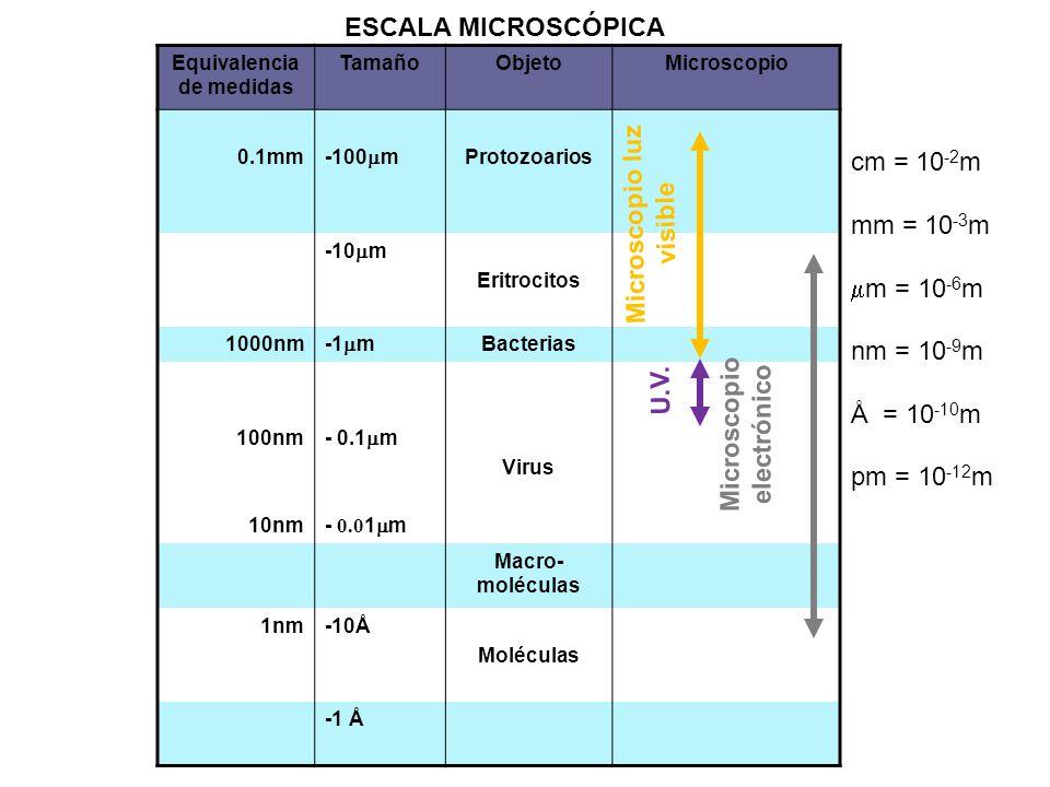 Equivalencia de medidas TamañoObjetoMicroscopio 0.1mm -100 m Protozoarios -10 m Eritrocitos 1000nm -1 m Bacterias 100nm 10nm - 0.1 m - 0.0 1 m Virus M