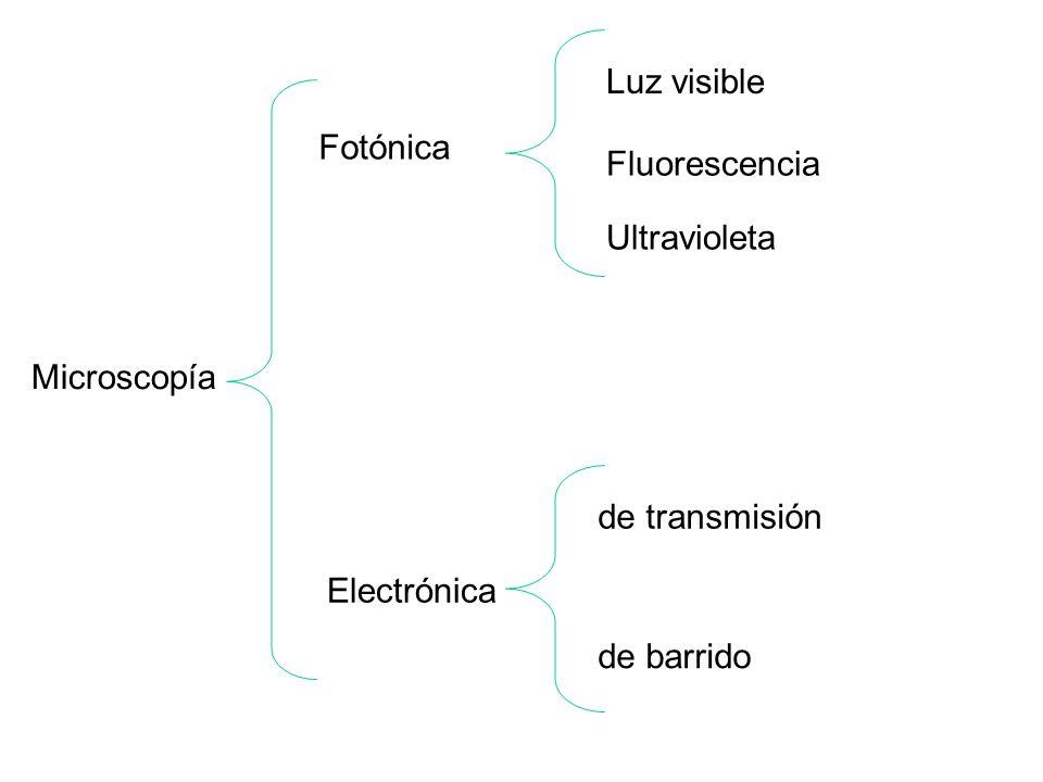 Microscopía Fotónica Electrónica de transmisión de barrido Luz visible Fluorescencia Ultravioleta