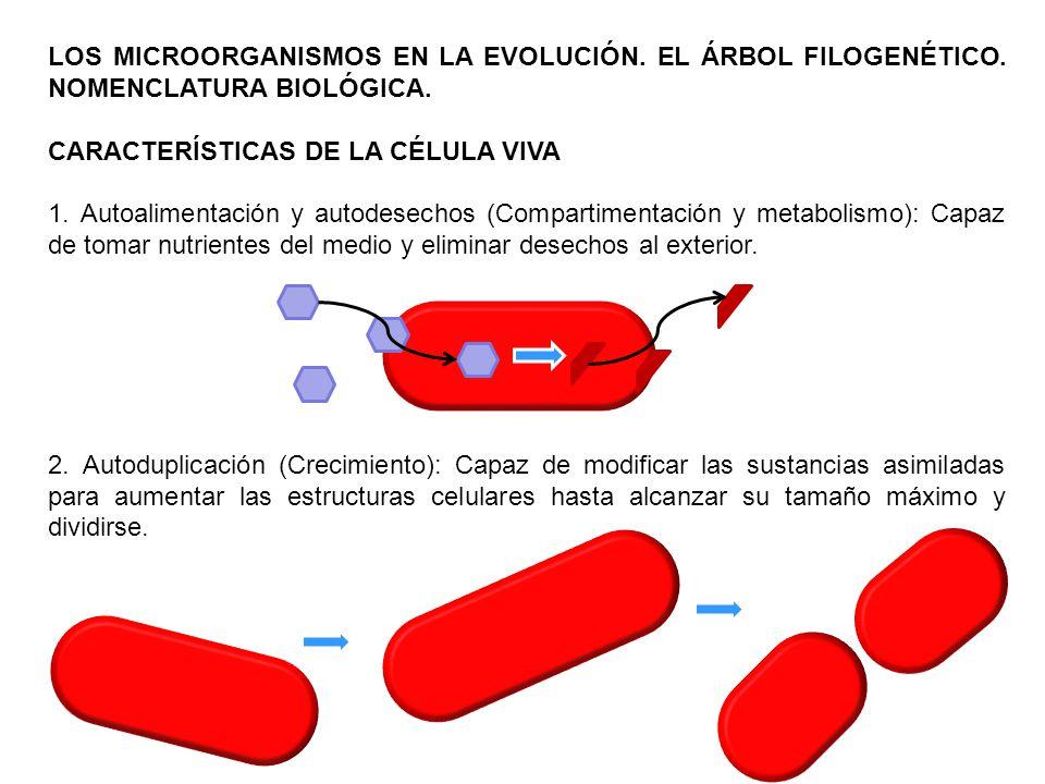 LOS MICROORGANISMOS EN LA EVOLUCIÓN. EL ÁRBOL FILOGENÉTICO. NOMENCLATURA BIOLÓGICA. CARACTERÍSTICAS DE LA CÉLULA VIVA 1. Autoalimentación y autodesech
