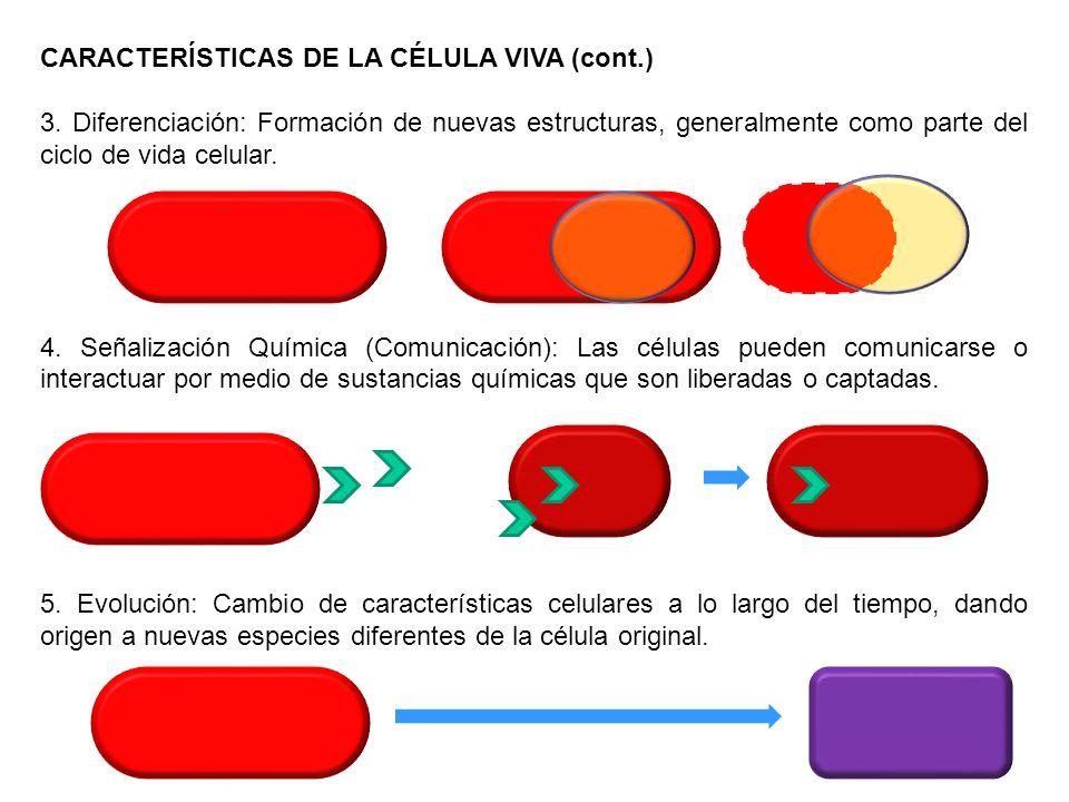 CARACTERÍSTICAS DE LA CÉLULA VIVA (cont.) 3. Diferenciación: Formación de nuevas estructuras, generalmente como parte del ciclo de vida celular. 4. Se