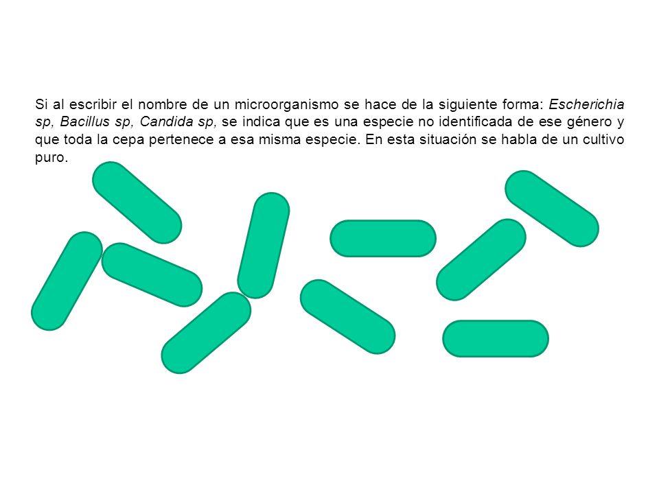 Si al escribir el nombre de un microorganismo se hace de la siguiente forma: Escherichia sp, Bacillus sp, Candida sp, se indica que es una especie no