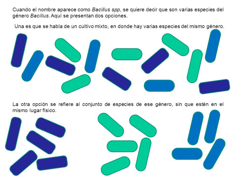 Cuando el nombre aparece como Bacillus spp, se quiere decir que son varias especies del género Bacillus. Aquí se presentan dos opciones. Una es que se