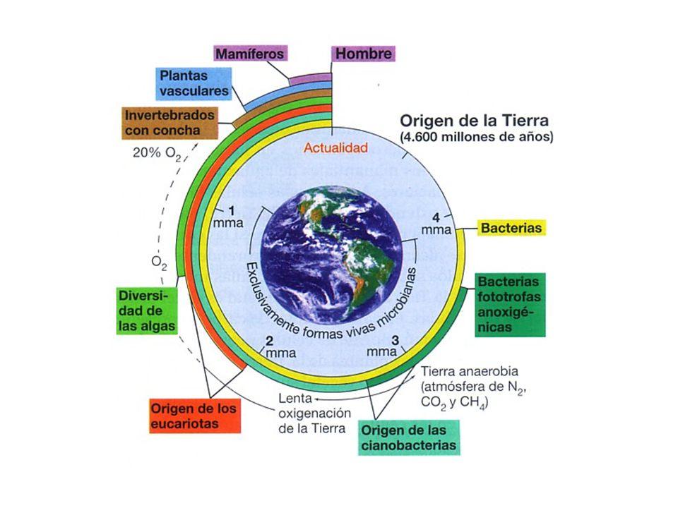 BiologíaPuede considerarse parte de esta ciencia, apoya en el estudio de la historia de la vida y de los organismos actuales.