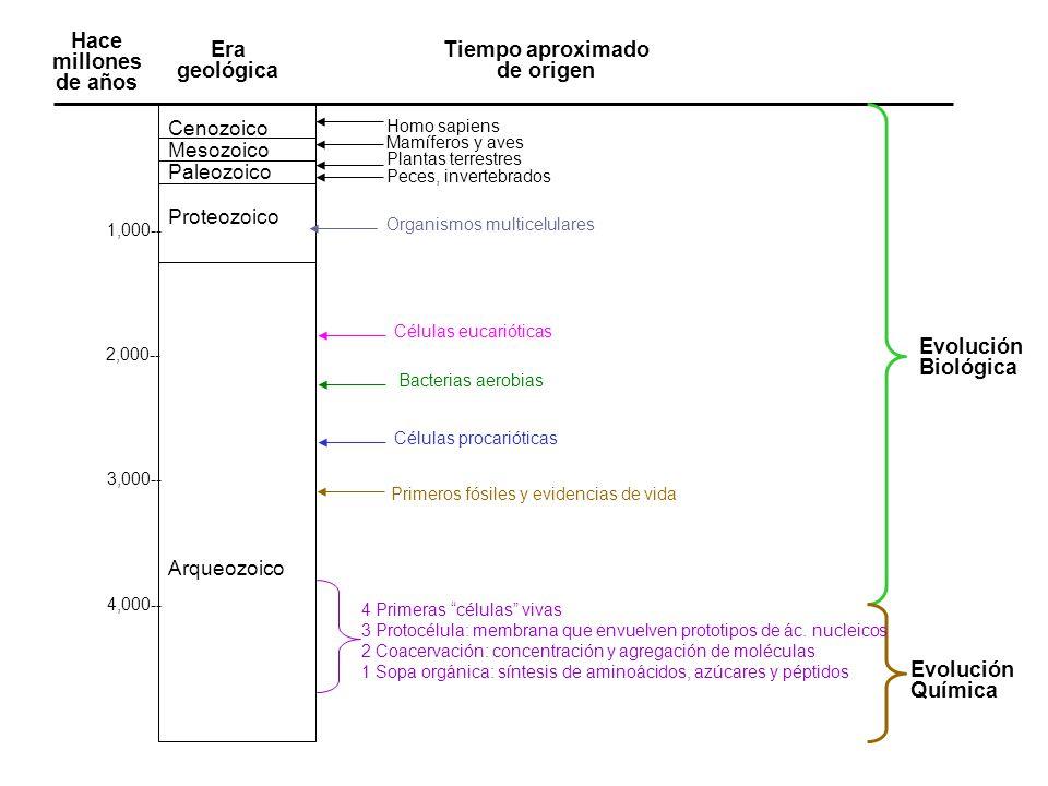 EVENTOIMPORTANCIA PARA LA VIDA 1) Sopa orgánicaPrimeras moléculas orgánicas a partir de compuestos inorgánicos, presentes en una atmósfera reductora.