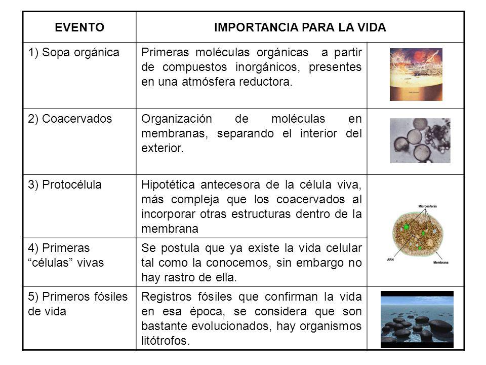 LOS MICROORGANISMOS EN LA EVOLUCIÓN.EL ÁRBOL FILOGENÉTICO.