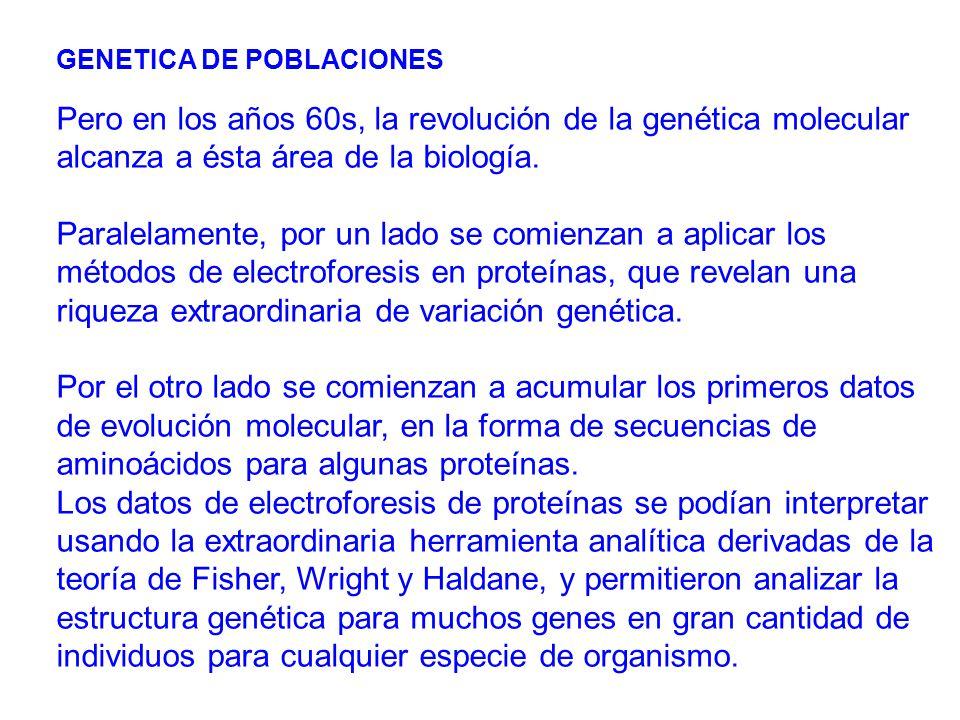 GENETICA DE POBLACIONES Pero en los años 60s, la revolución de la genética molecular alcanza a ésta área de la biología.
