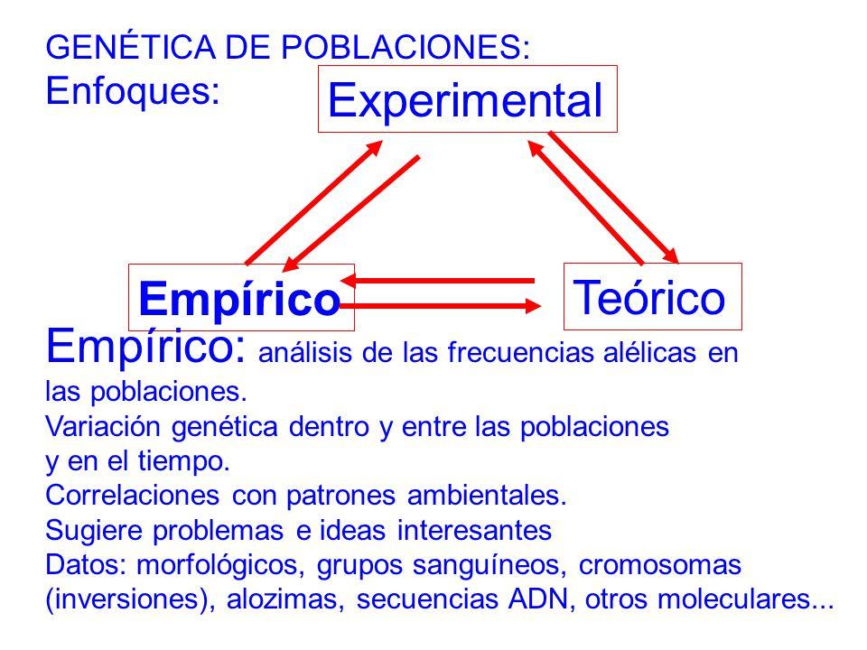 GENÉTICA DE POBLACIONES: Enfoques: Teórico Experimental Empírico Empírico: análisis de las frecuencias alélicas en las poblaciones.