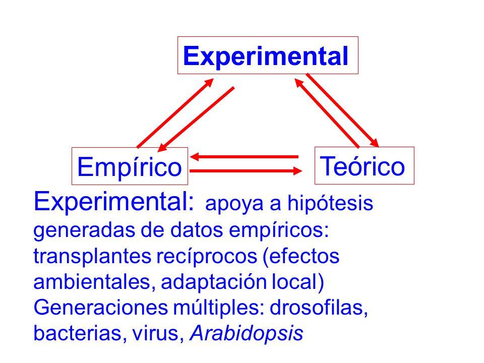 Teórico Experimental Empírico Experimental: apoya a hipótesis generadas de datos empíricos: transplantes recíprocos (efectos ambientales, adaptación local) Generaciones múltiples: drosofilas, bacterias, virus, Arabidopsis
