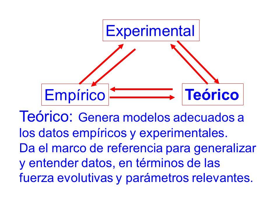 Teórico Experimental Empírico Teórico: Genera modelos adecuados a los datos empíricos y experimentales.