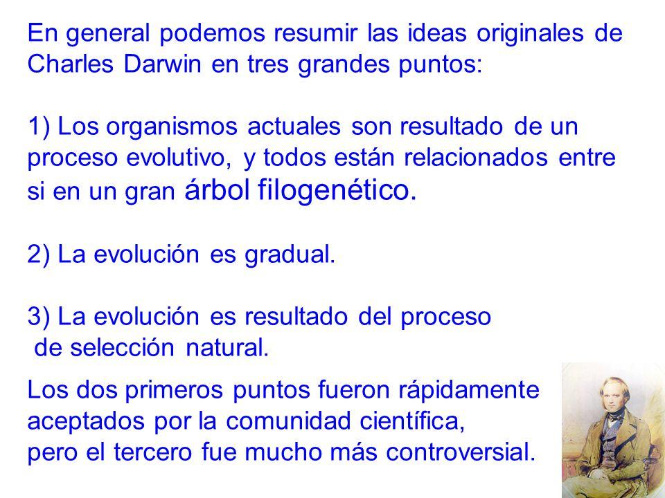 En general podemos resumir las ideas originales de Charles Darwin en tres grandes puntos: 1) Los organismos actuales son resultado de un proceso evolutivo, y todos están relacionados entre si en un gran árbol filogenético.