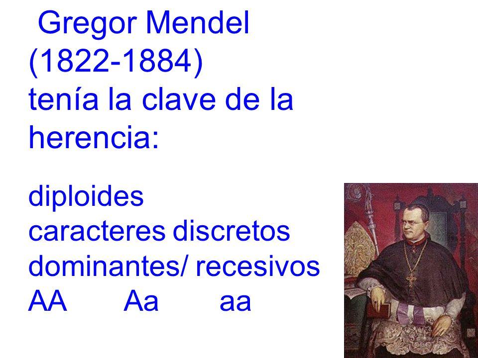 Gregor Mendel (1822-1884) tenía la clave de la herencia: diploides caracteres discretos dominantes/ recesivos AA Aaaa