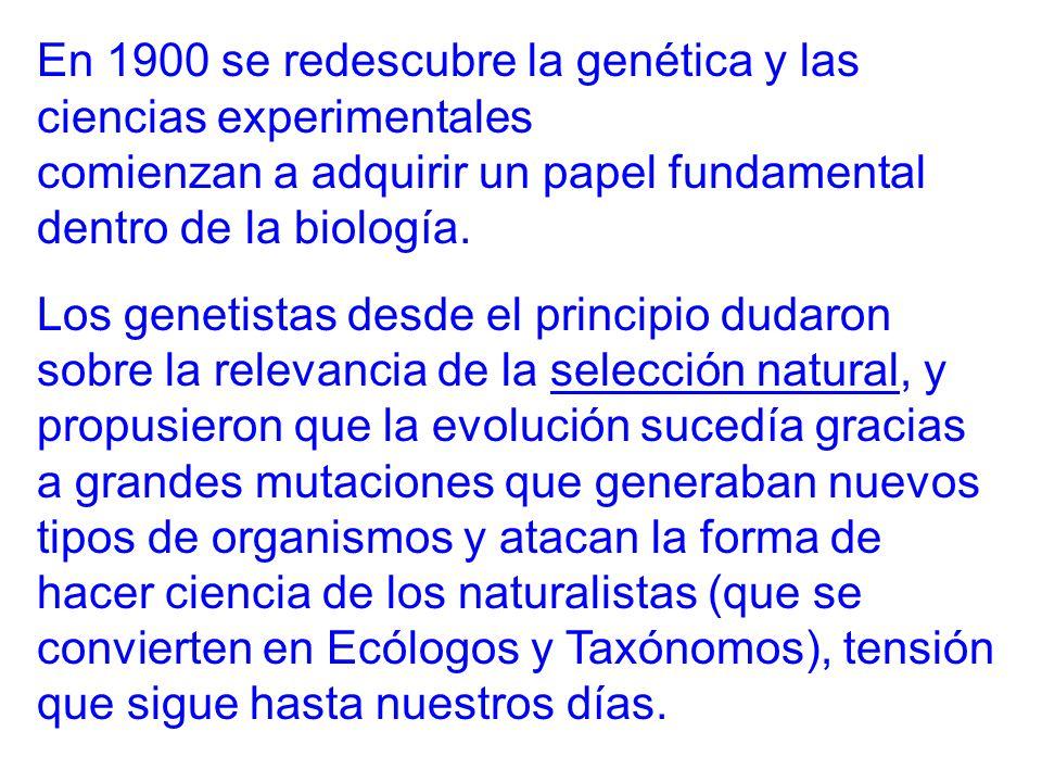 En 1900 se redescubre la genética y las ciencias experimentales comienzan a adquirir un papel fundamental dentro de la biología.