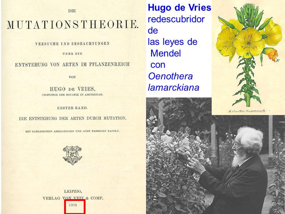 . Hugo de Vries redescubridor de las leyes de Mendel con Oenothera lamarckiana