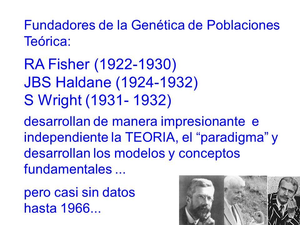 Fundadores de la Genética de Poblaciones Teórica: RA Fisher (1922-1930) JBS Haldane (1924-1932) S Wright (1931- 1932) desarrollan de manera impresionante e independiente la TEORIA, el paradigma y desarrollan los modelos y conceptos fundamentales...