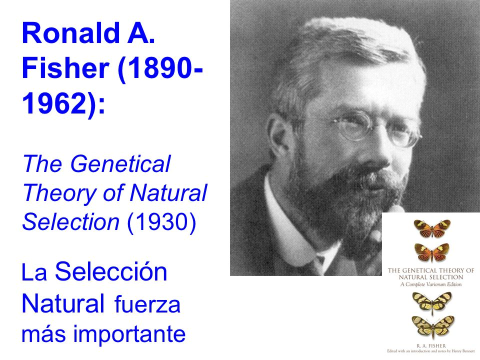 Ronald A. Fisher (1890- 1962): The Genetical Theory of Natural Selection (1930) La Selección Natural fuerza más importante