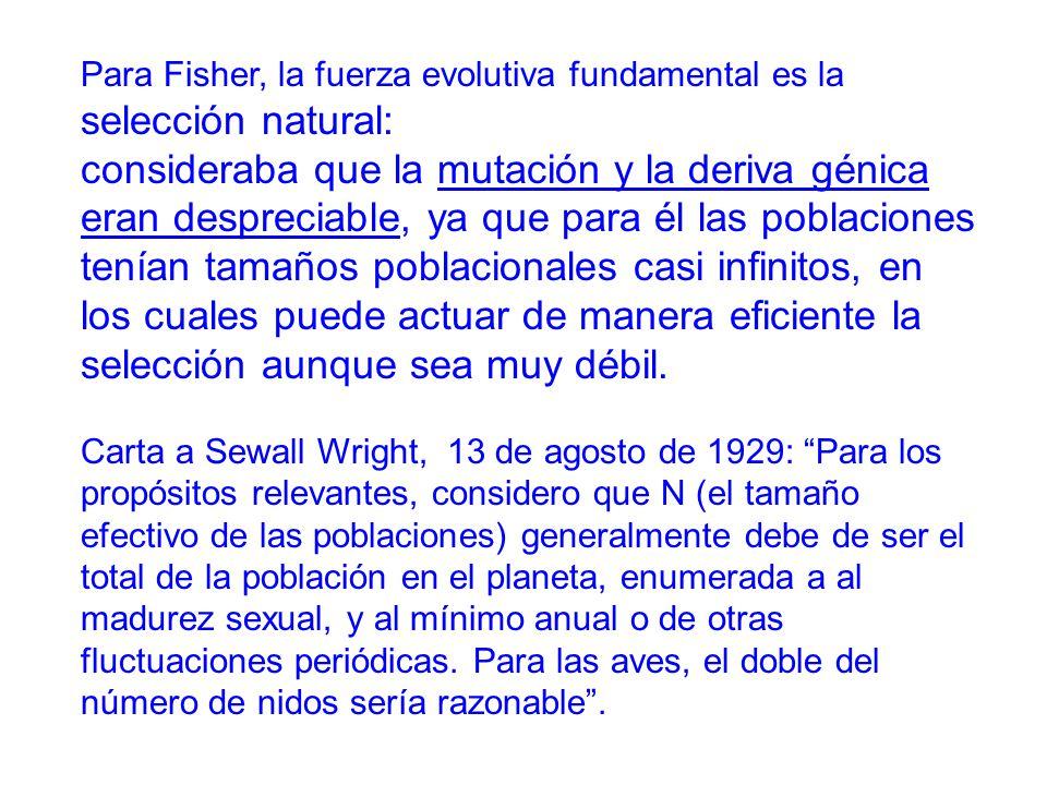 Para Fisher, la fuerza evolutiva fundamental es la selección natural: consideraba que la mutación y la deriva génica eran despreciable, ya que para él las poblaciones tenían tamaños poblacionales casi infinitos, en los cuales puede actuar de manera eficiente la selección aunque sea muy débil.
