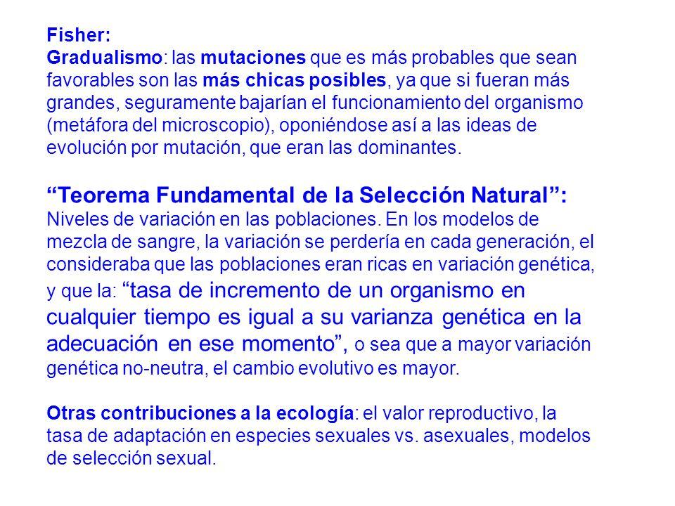 Fisher: Gradualismo: las mutaciones que es más probables que sean favorables son las más chicas posibles, ya que si fueran más grandes, seguramente bajarían el funcionamiento del organismo (metáfora del microscopio), oponiéndose así a las ideas de evolución por mutación, que eran las dominantes.