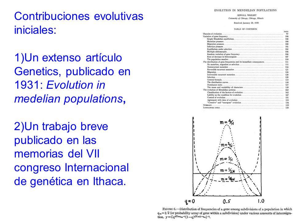 Contribuciones evolutivas iniciales: 1)Un extenso artículo Genetics, publicado en 1931: Evolution in medelian populations, 2)Un trabajo breve publicado en las memorias del VII congreso Internacional de genética en Ithaca.