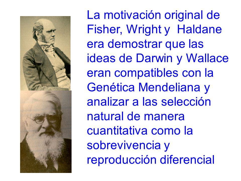 La motivación original de Fisher, Wright y Haldane era demostrar que las ideas de Darwin y Wallace eran compatibles con la Genética Mendeliana y analizar a las selección natural de manera cuantitativa como la sobrevivencia y reproducción diferencial