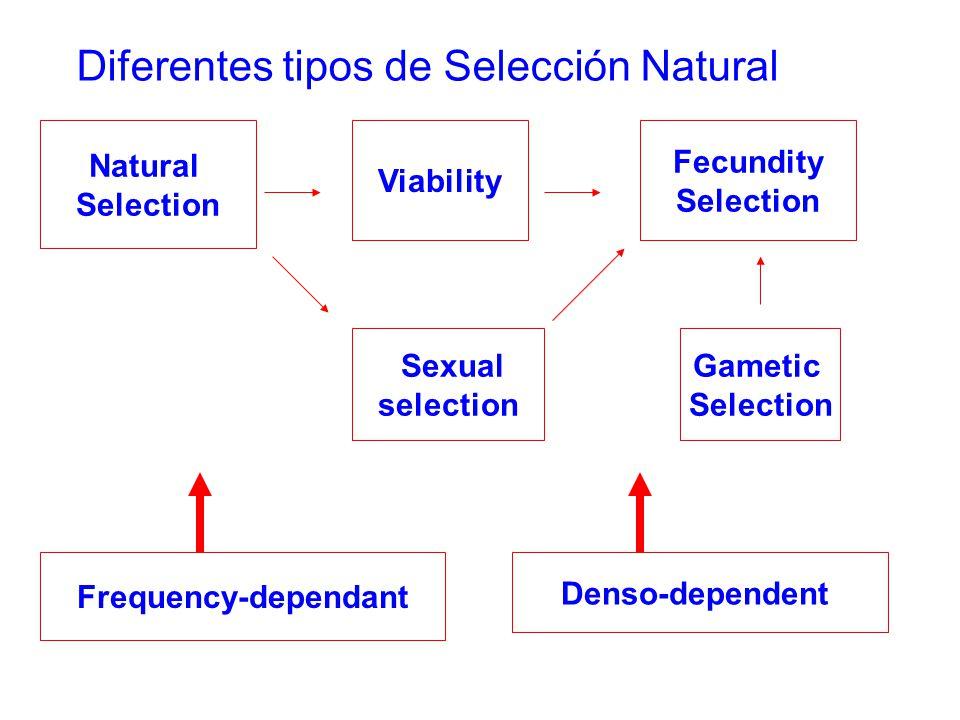 Diferentes tipos de Selección Natural Natural Selection Viability Gametic Selection Fecundity Selection Sexual selection Frequency-dependant Denso-dependent