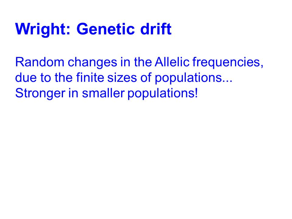 Wright: Genetic drift Random changes in the Allelic frequencies, due to the finite sizes of populations... Stronger in smaller populations!