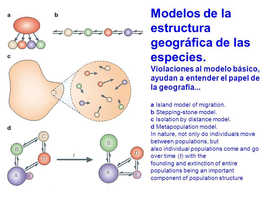 Modelos de la estructura geográfica de las especies.