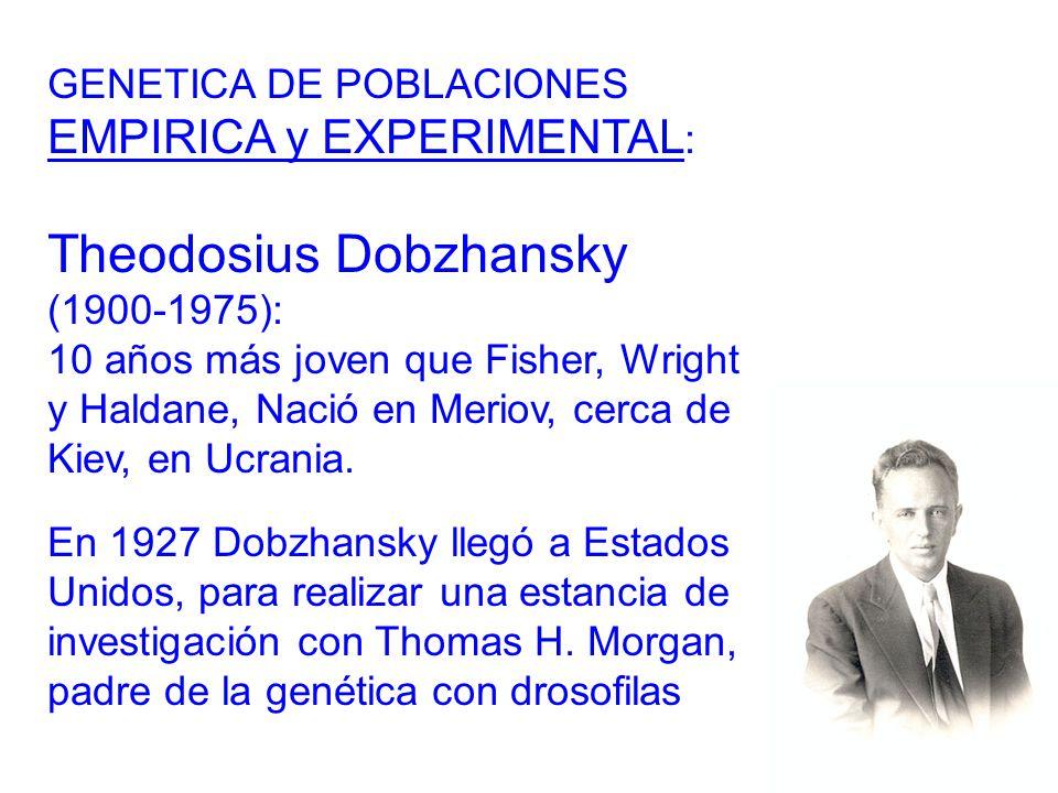 GENETICA DE POBLACIONES EMPIRICA y EXPERIMENTAL : Theodosius Dobzhansky (1900-1975): 10 años más joven que Fisher, Wright y Haldane, Nació en Meriov, cerca de Kiev, en Ucrania.