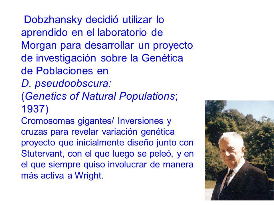 Dobzhansky decidió utilizar lo aprendido en el laboratorio de Morgan para desarrollar un proyecto de investigación sobre la Genética de Poblaciones en D.